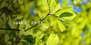 HOMILY FOR FRIDAY THE THIRTY-FOURTH WEEK IN ORDINARY TIME YEAR II